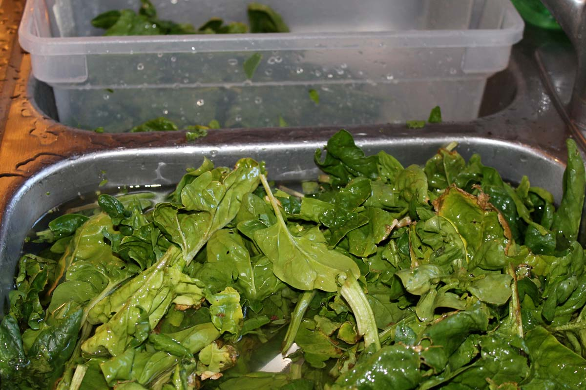 How to freeze spinach 75