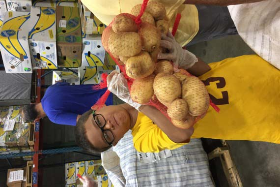 Last Day of Packing Potato (LOVE) at Manna Food Bank