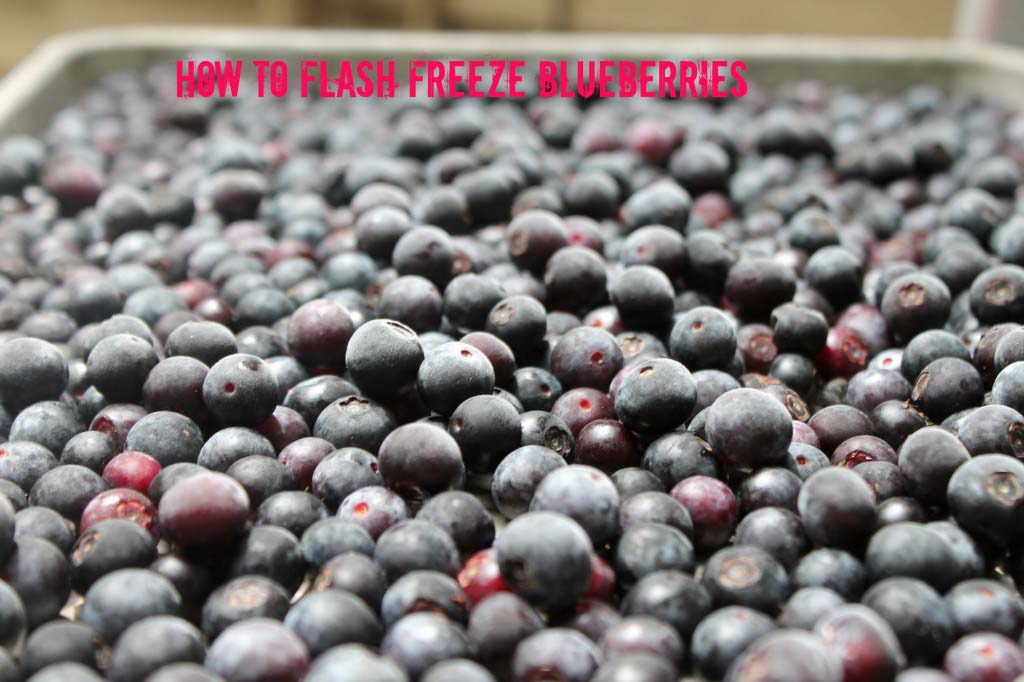 How to Flash Freeze Blueberries